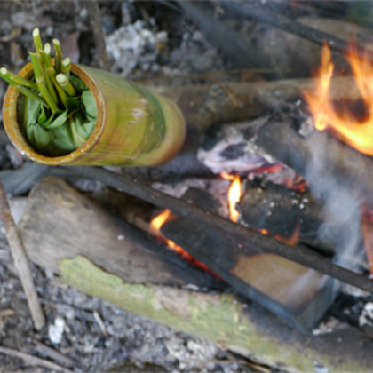 Cooking Ayam Pansoh - the traditional way in green bamboo over an open fire